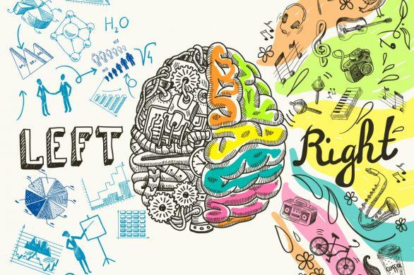 Bild på vänster och höger hjärnhalva